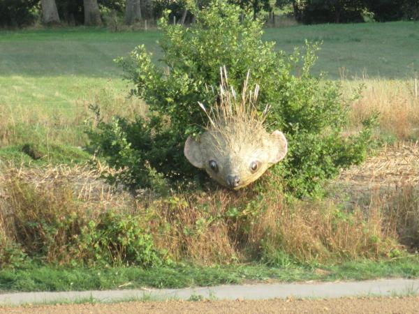 Hedgehogs on the greenway of the Epte Valley,